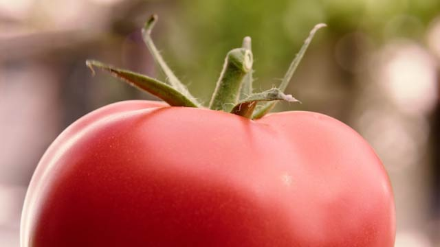 Innere Werte, Tomate Agro-Marketing Suisse